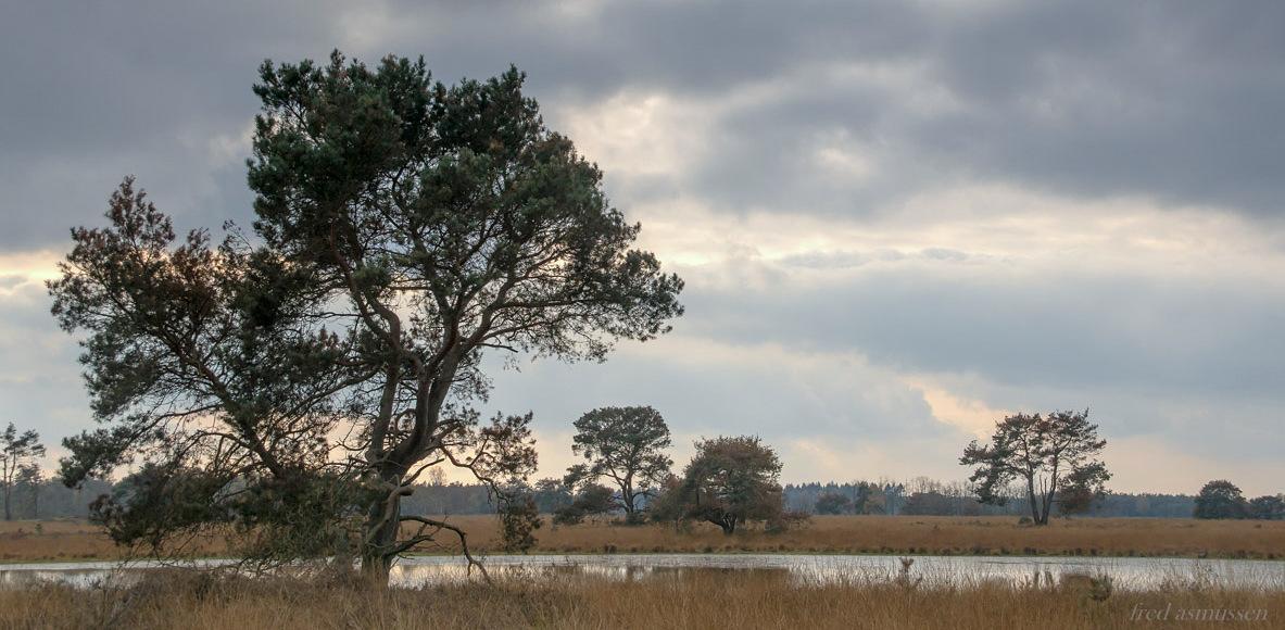landschap strabrecht (1 van 1)-24