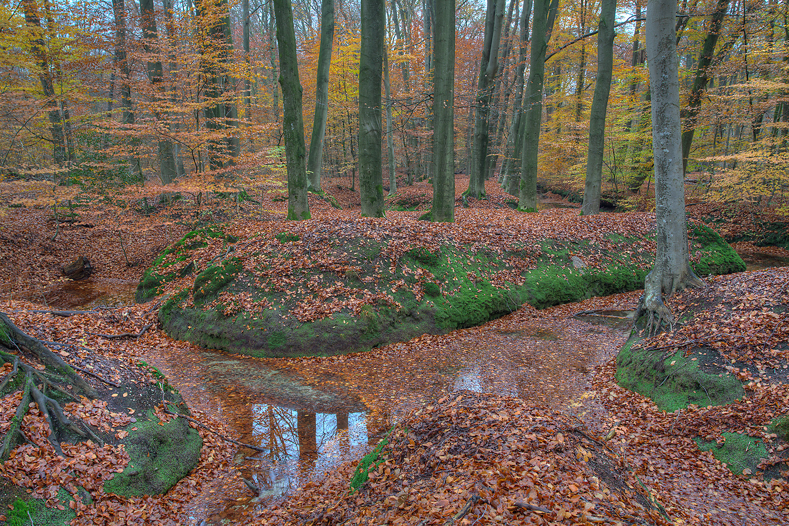 074 Sprengenbos 19-11-2014 HDR_B_V_1620