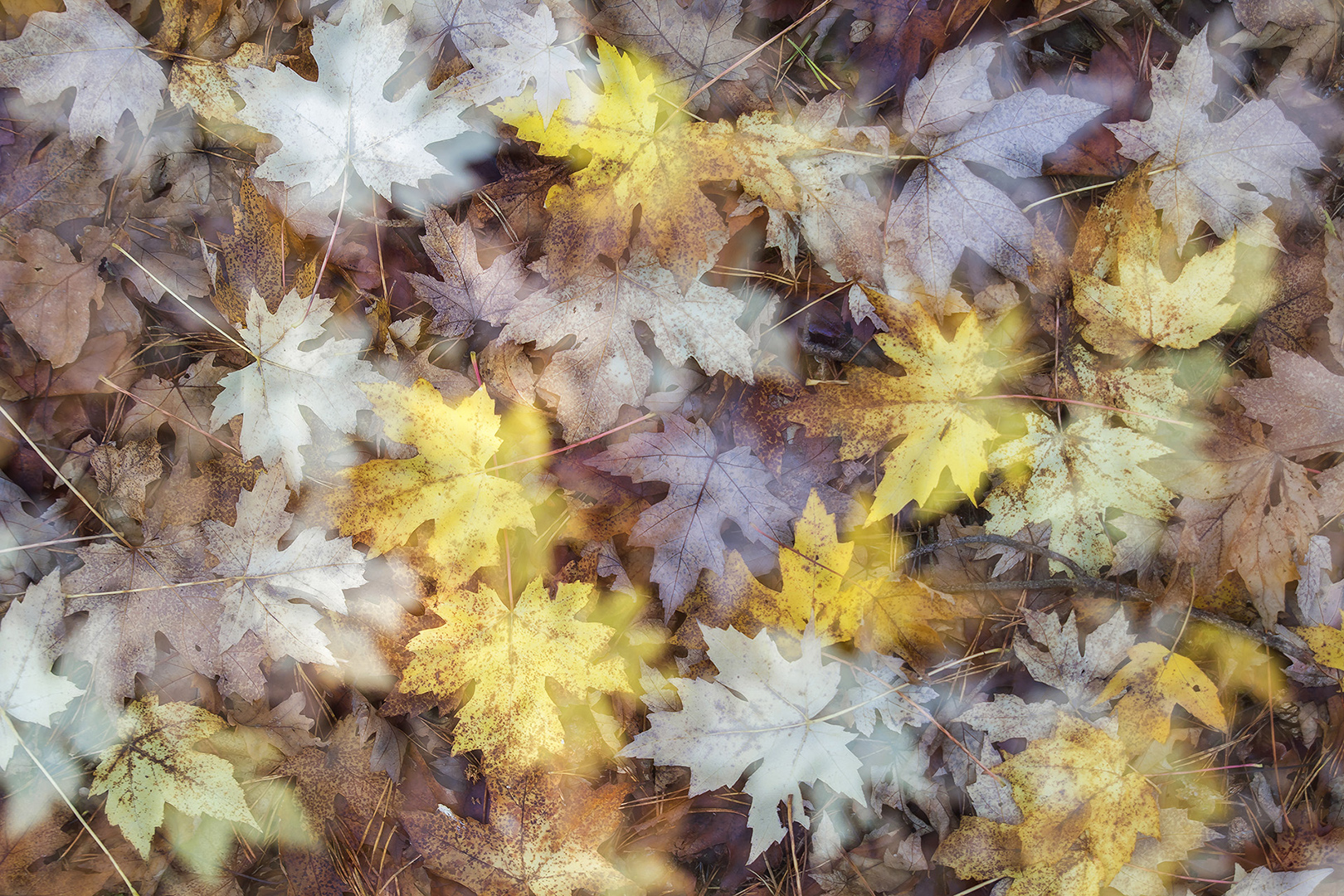 ddn herfstbladeren