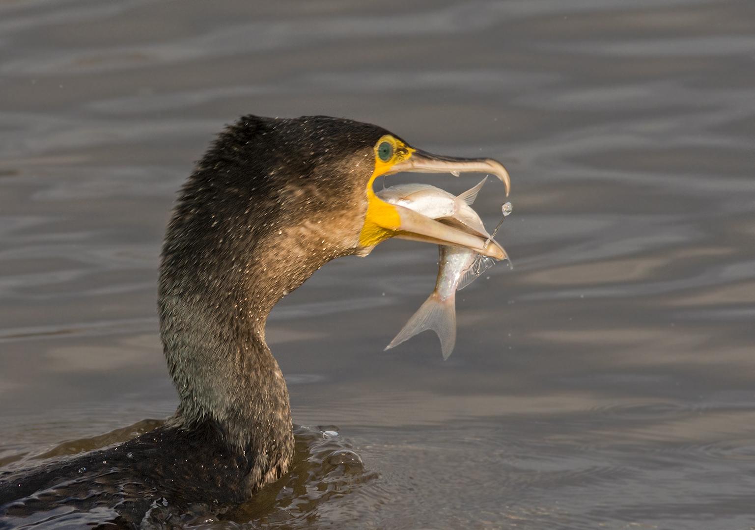 Vandaag vis