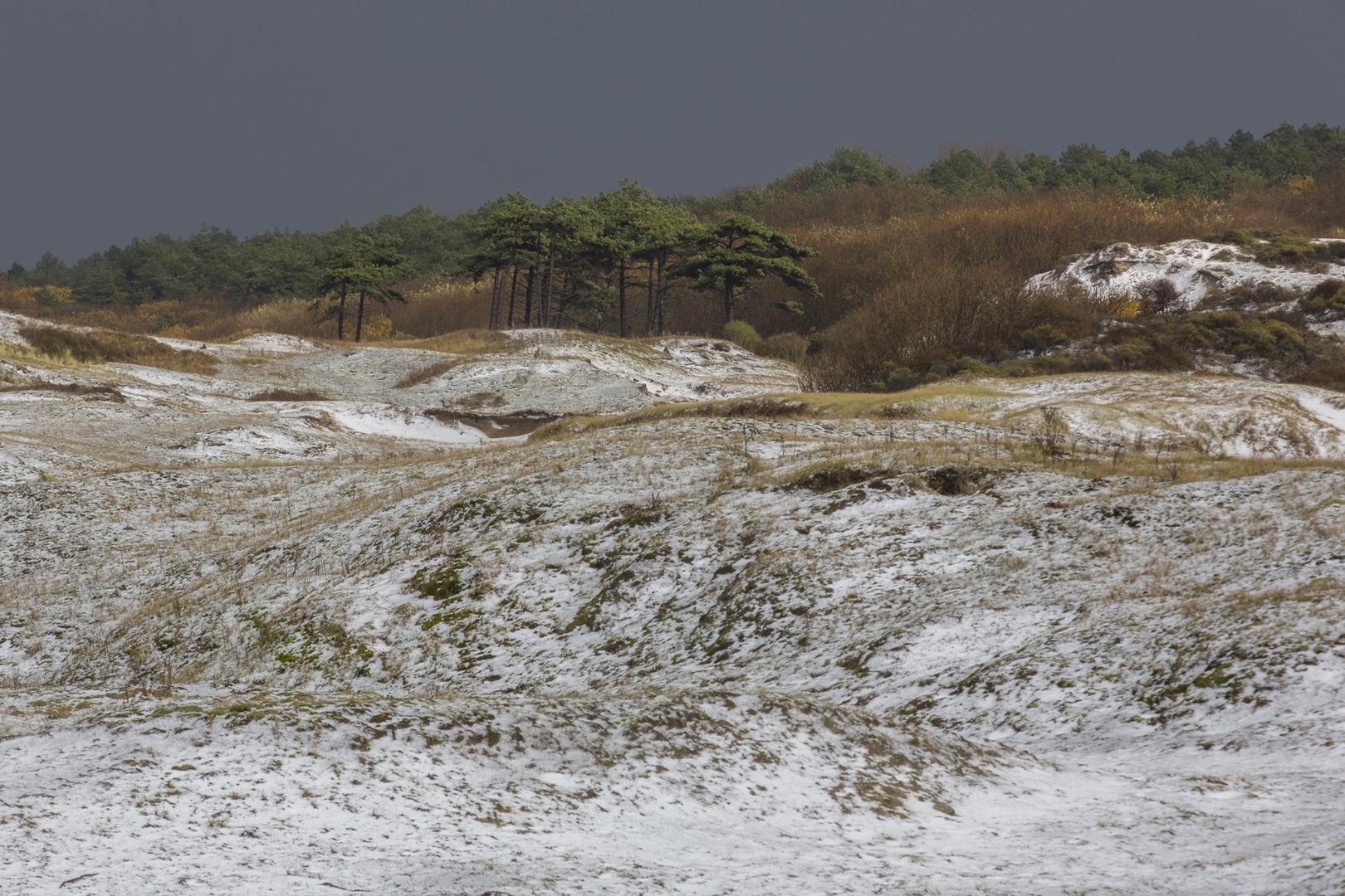 1877 duinen Noordwijk 2016-11-18 Bw-V 1620