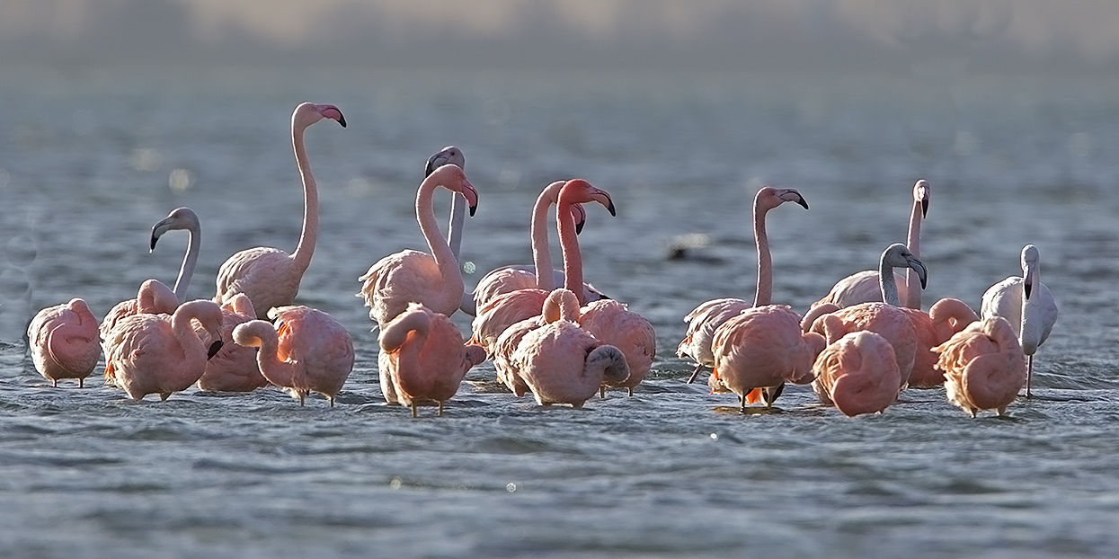 Flamingo-footo-2199
