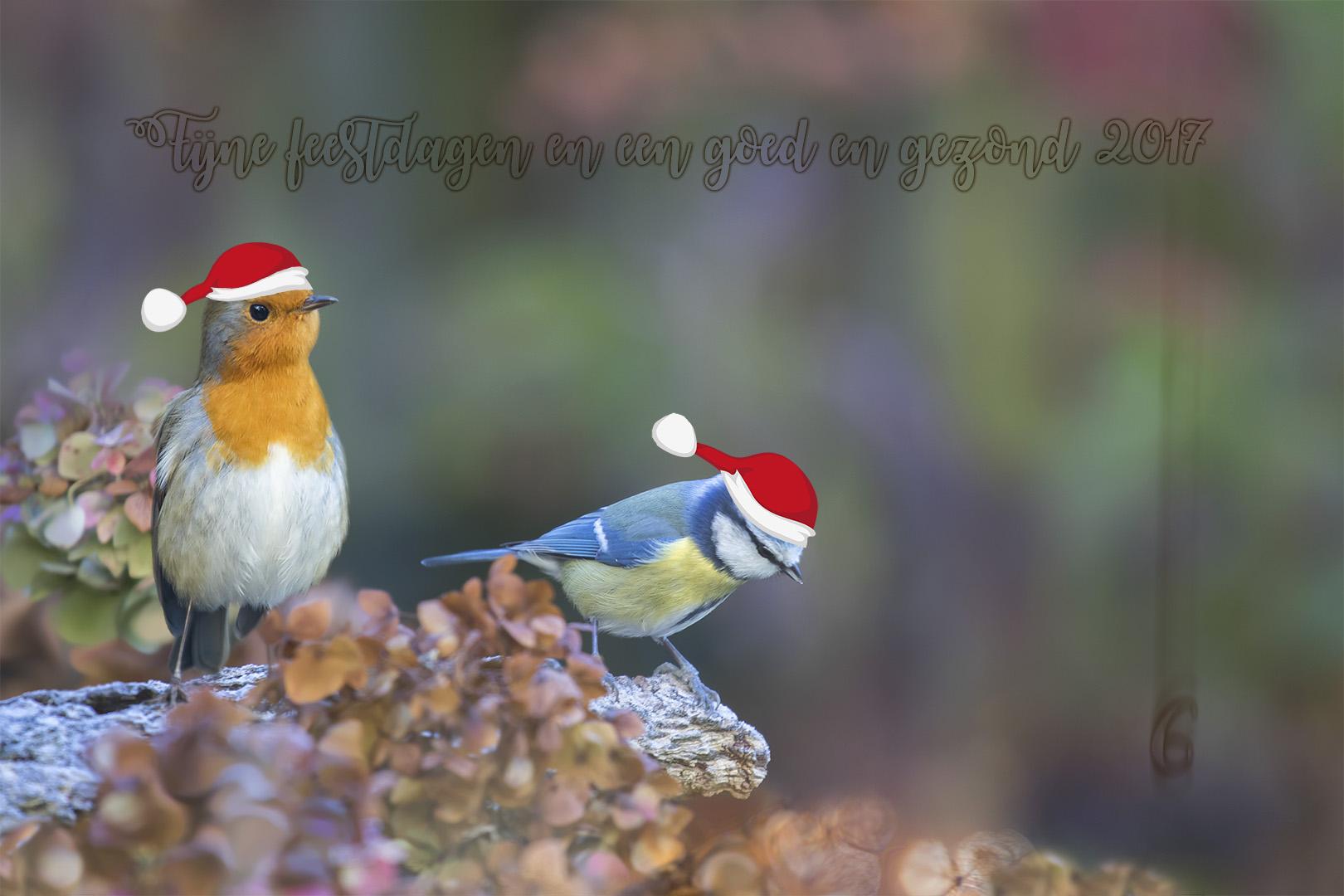 ddn kerstwens