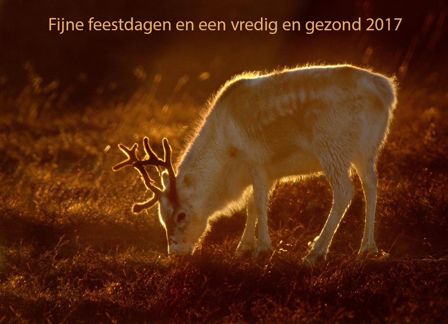 PA022243 Rendier Noordlapland_1492x1080 wenskaart