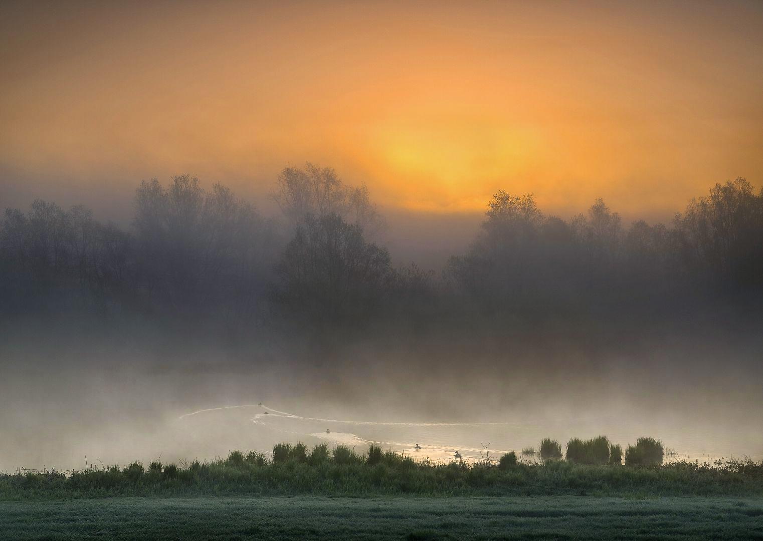 P4178533 IJssel  Eenden in de ochtend_1522x1080 2
