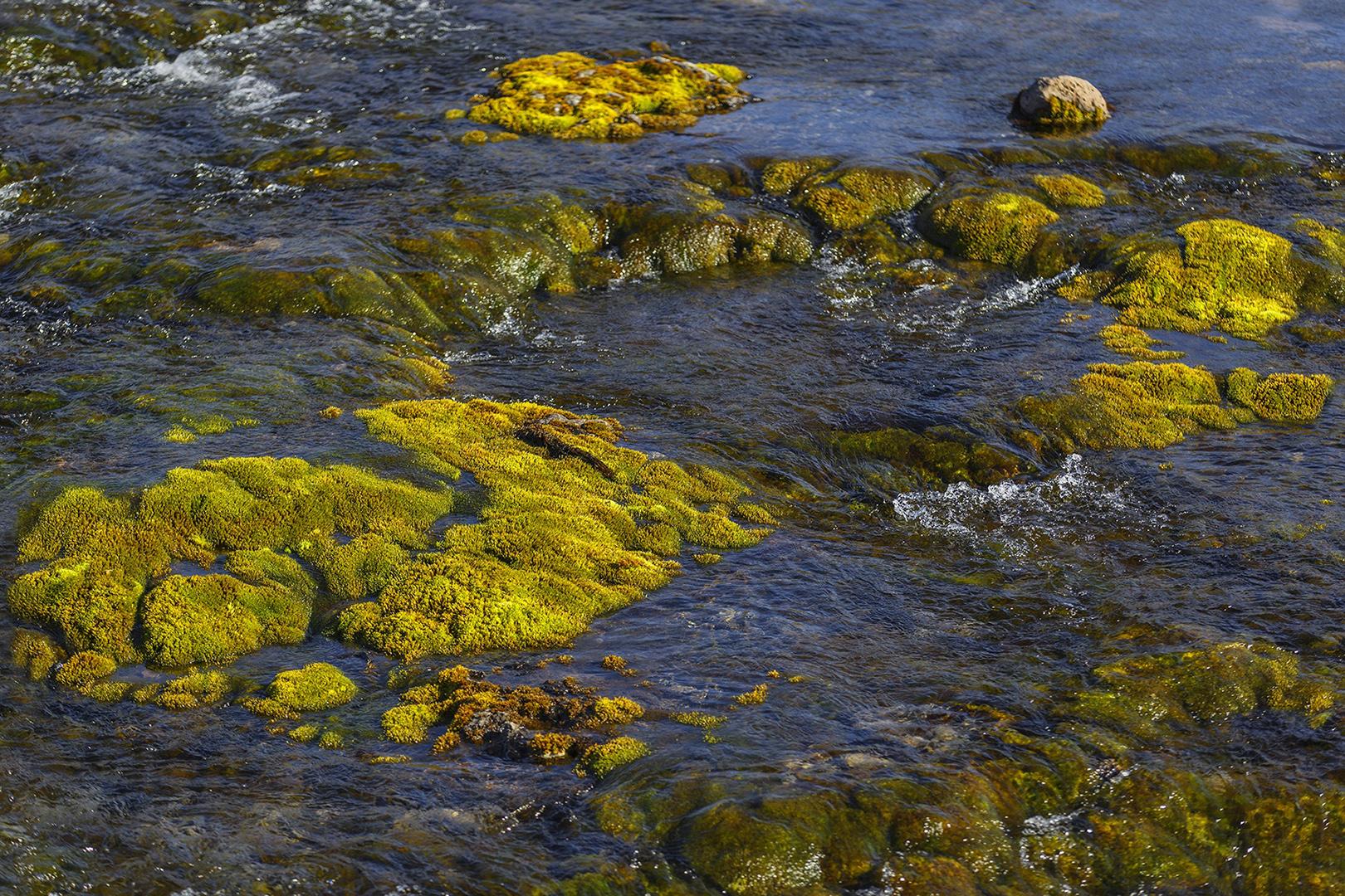 0393 Korstmossen in rivier 2016-07-28 Bw-v 1620