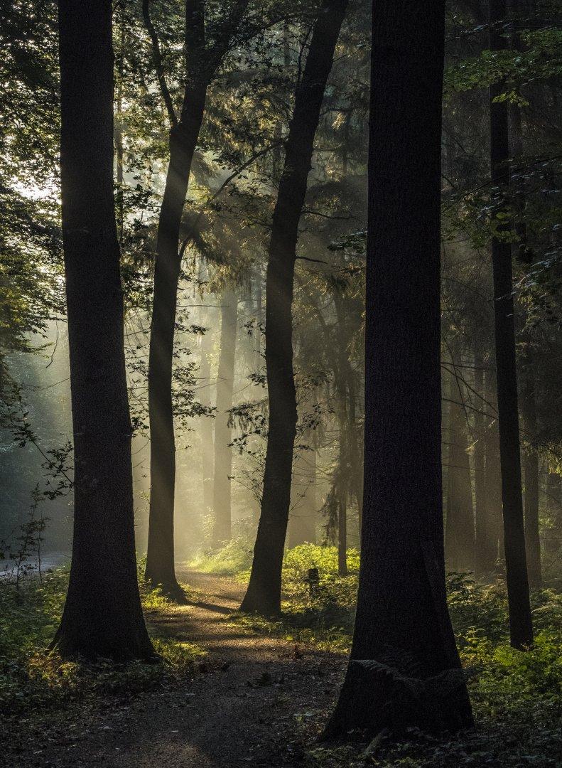 P9060148 Ochtend landschap bos Heeten zonneharp_791x1080