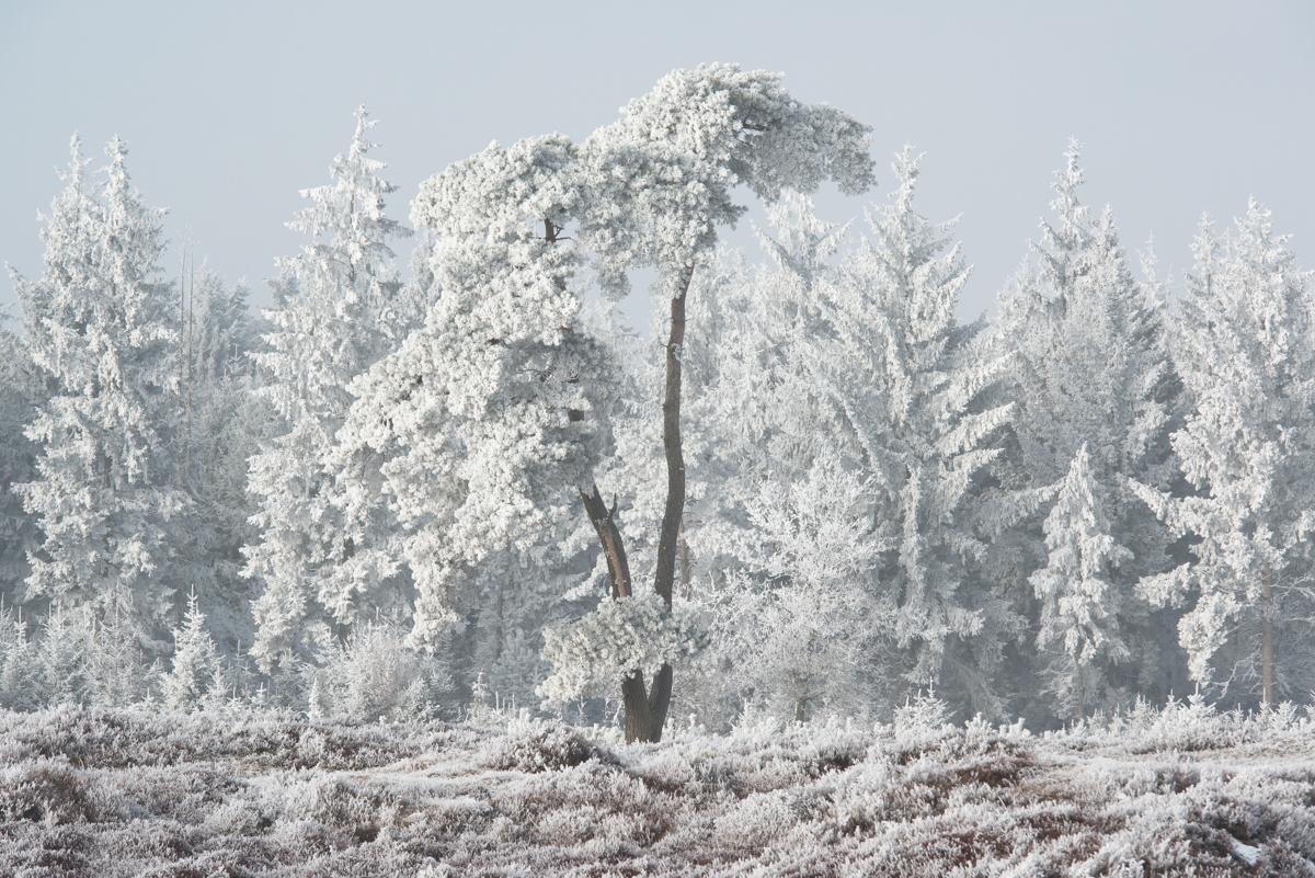 Aekingerzand, de kale duinen 18 jan 17 (1)