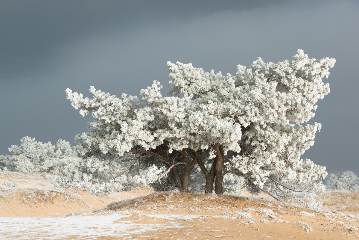Aekingerzand, de kale duinen 18 jan 17 (4)