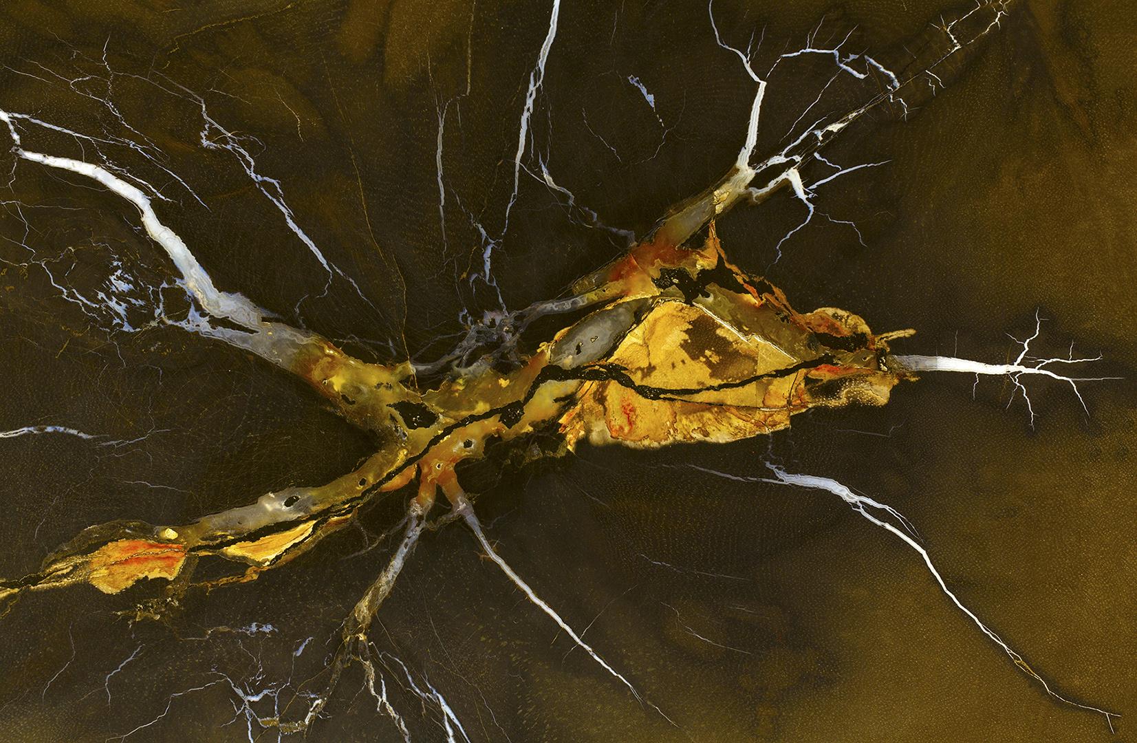 4240 Draak van een Fossiel 2017-01-28 Bw-v 1620