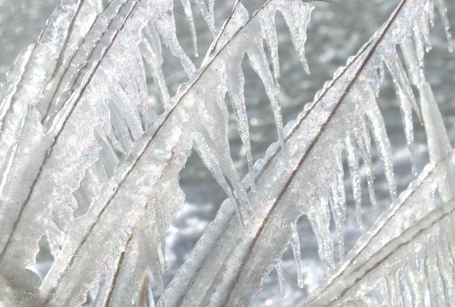 gouwzee ijspegels02 clikpic