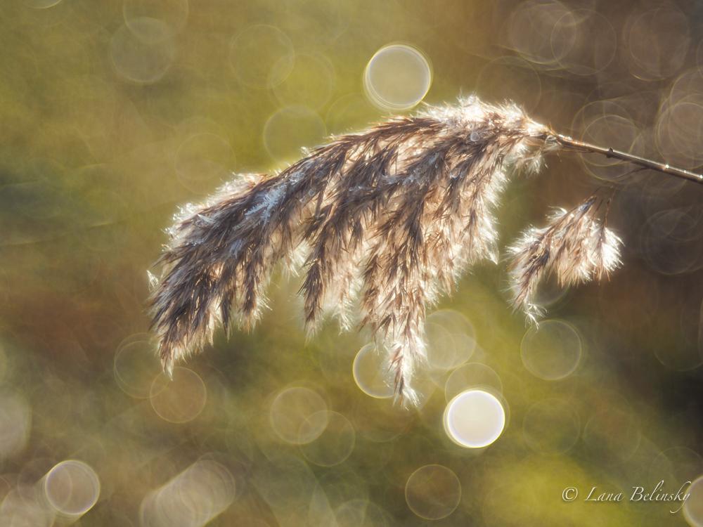 Grass, ice, bokeh (1 of 1)