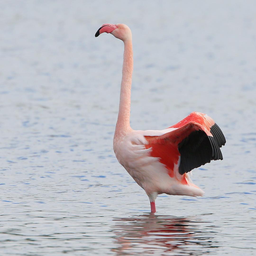 Flamingo8549ddn_LucidArts
