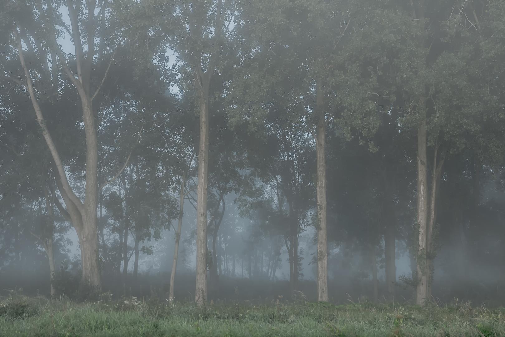 Het eerste licht in het mistige bosje