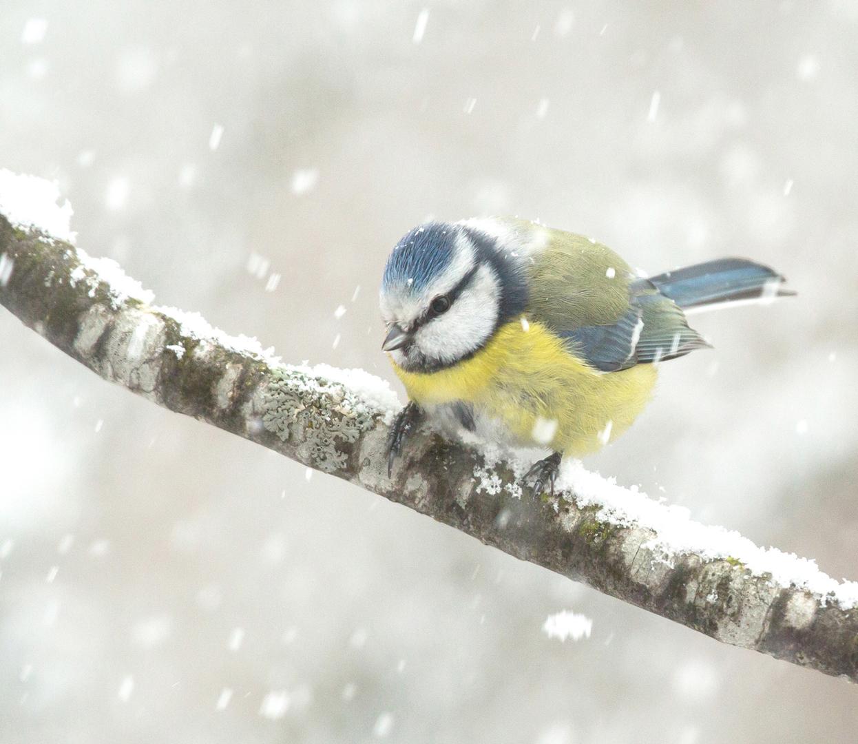 eccht winter