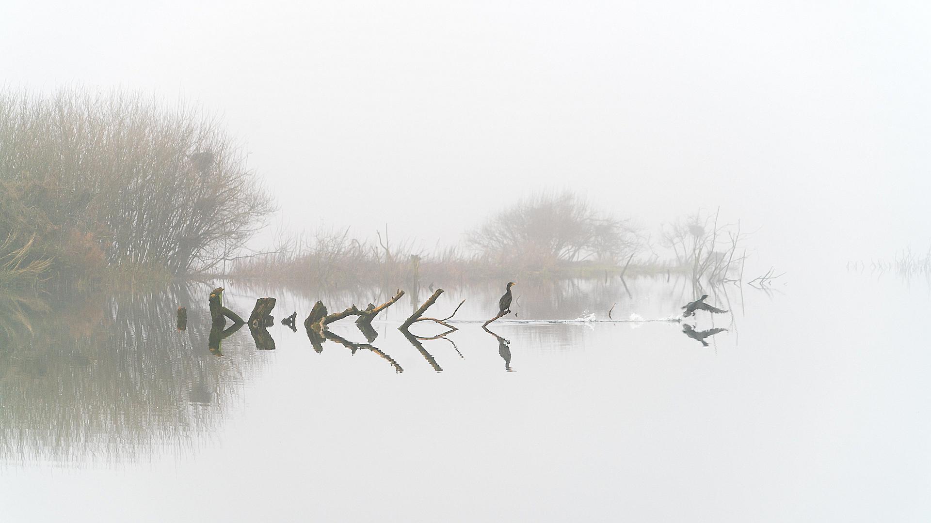 Water, mist en aalscholvers