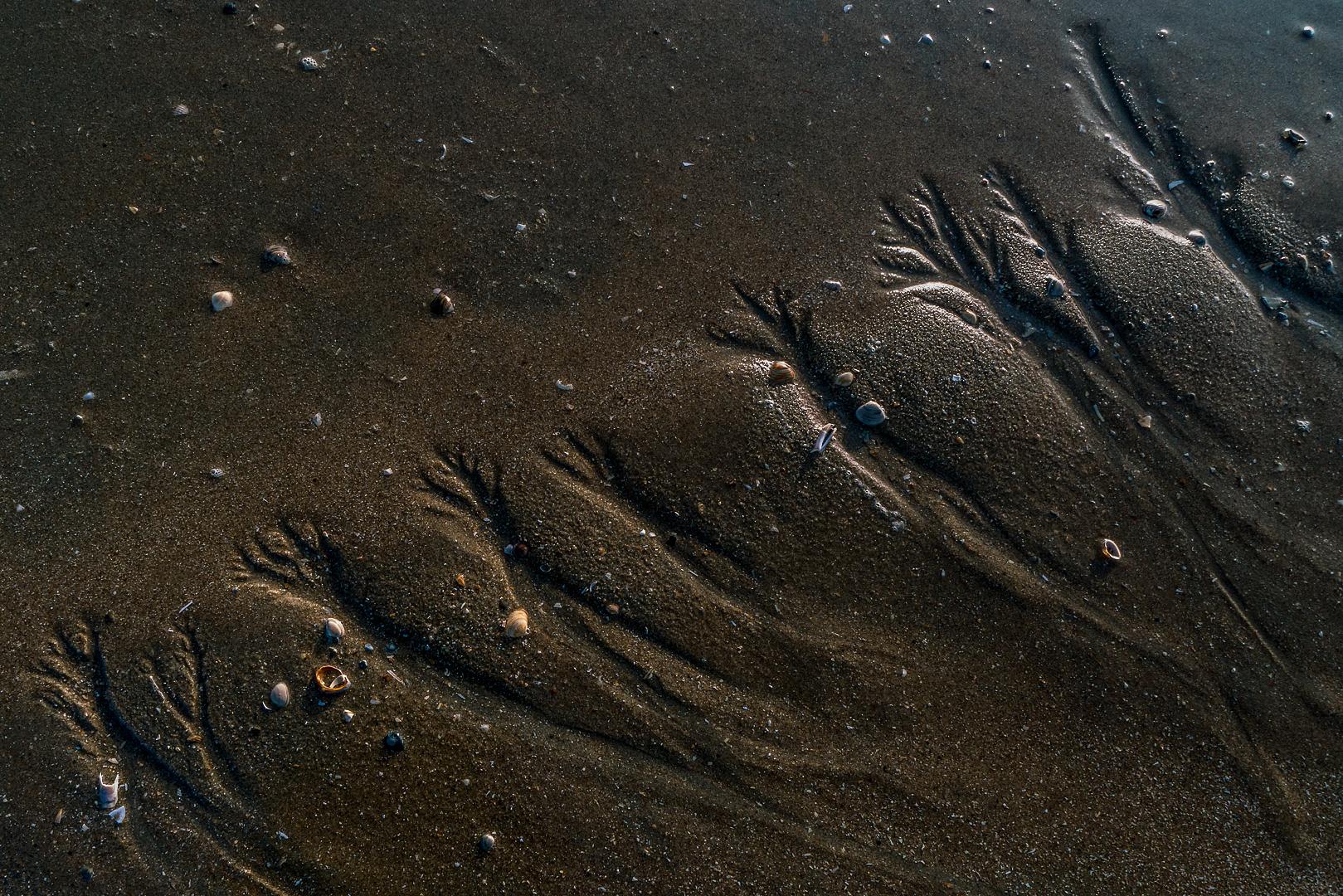 Zandbomen