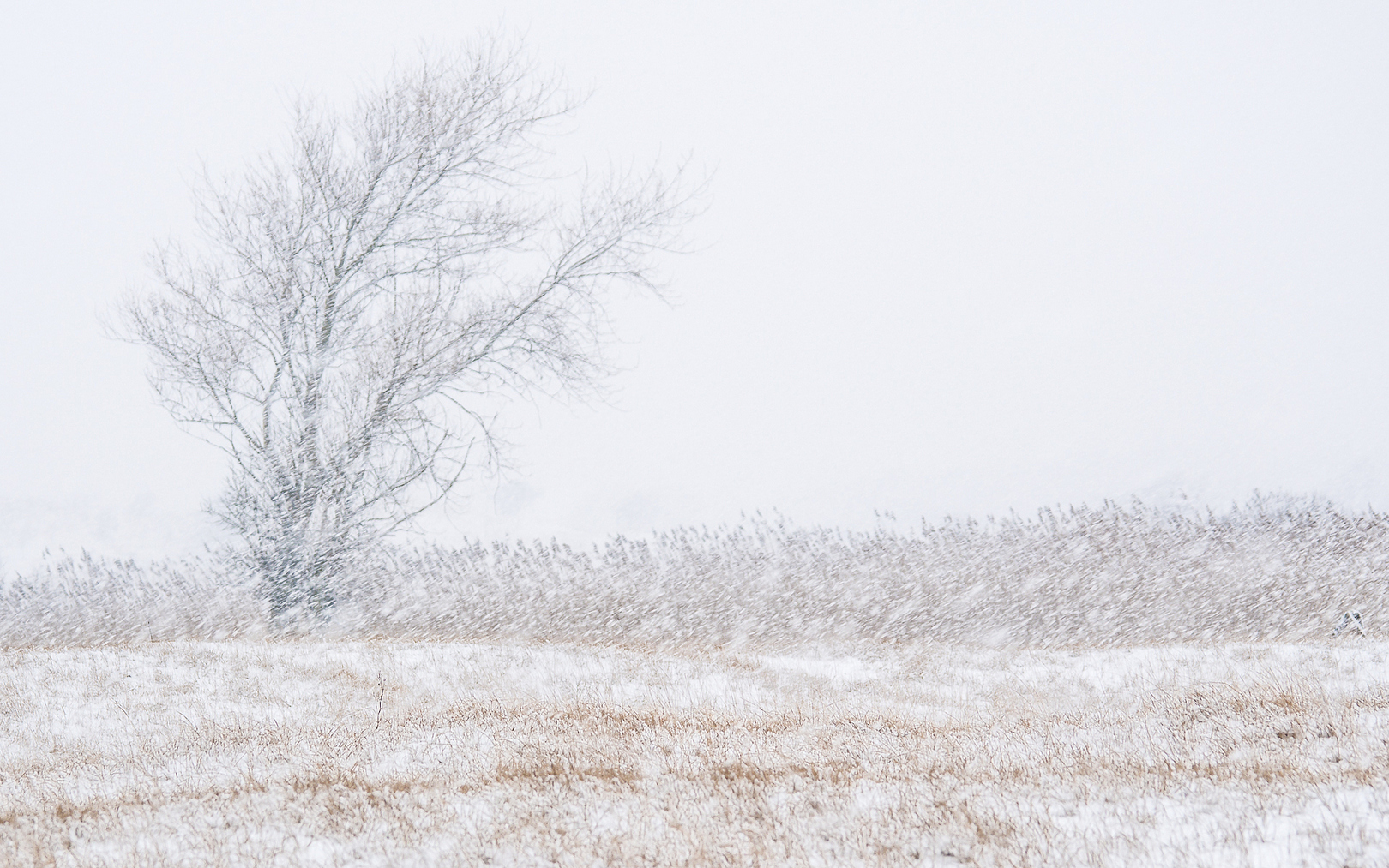 Sneeuwstorm Loes Belovics Deeldenatuur