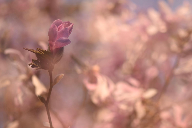 Mooi roze
