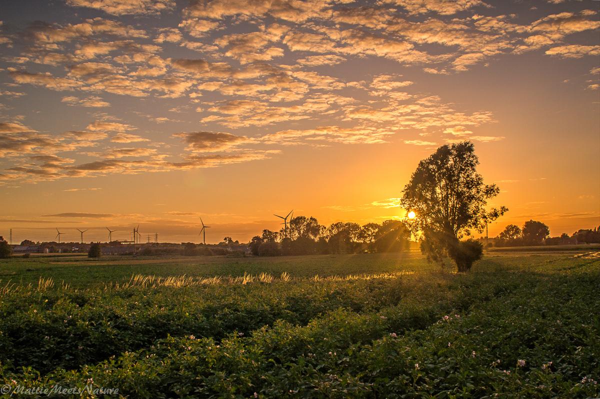 zonsondergang aangepast (1 van 1)