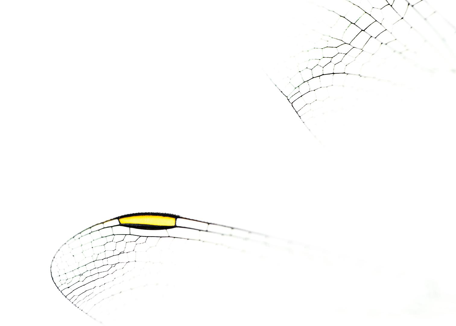 Vleugel libel