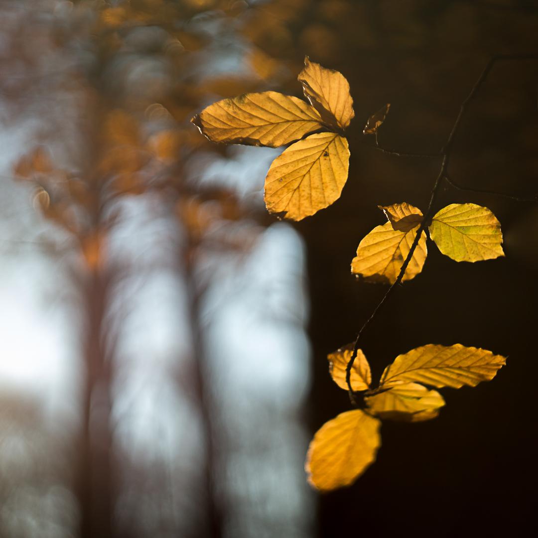 Herfst met helios
