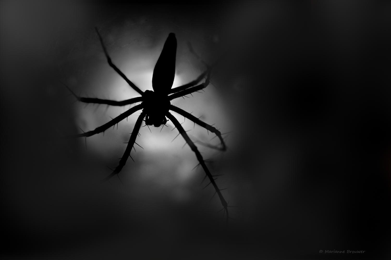 Z7A_1144-web