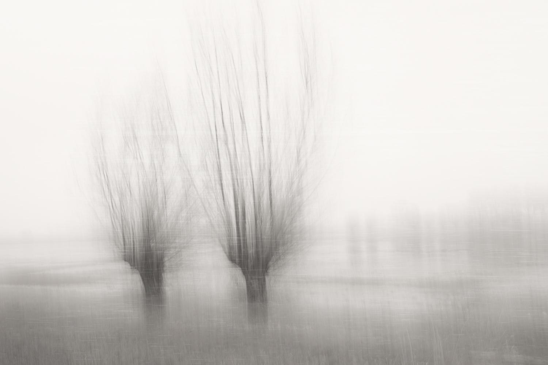 Wilgen in de mist