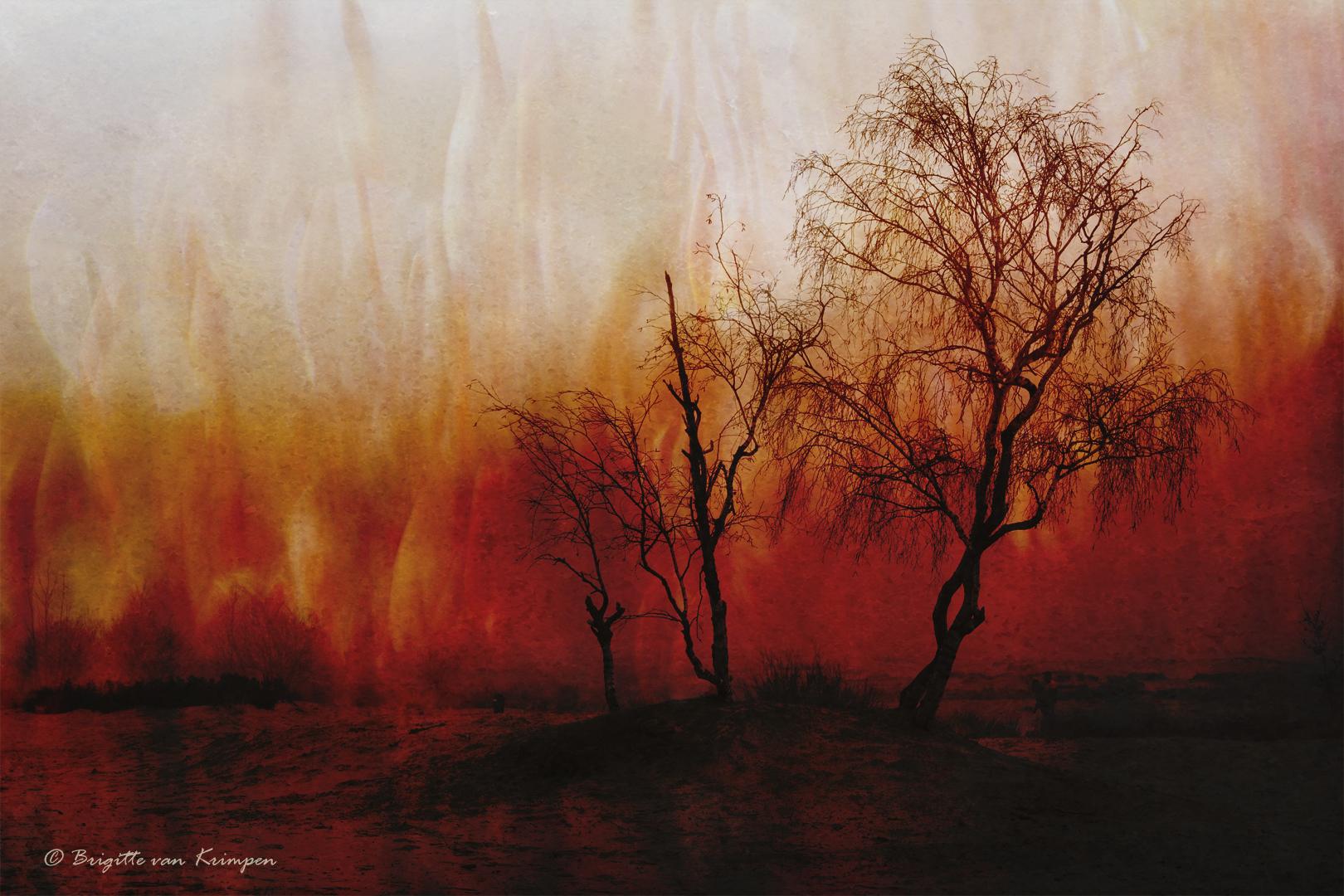 Sky on Fire5 DDN
