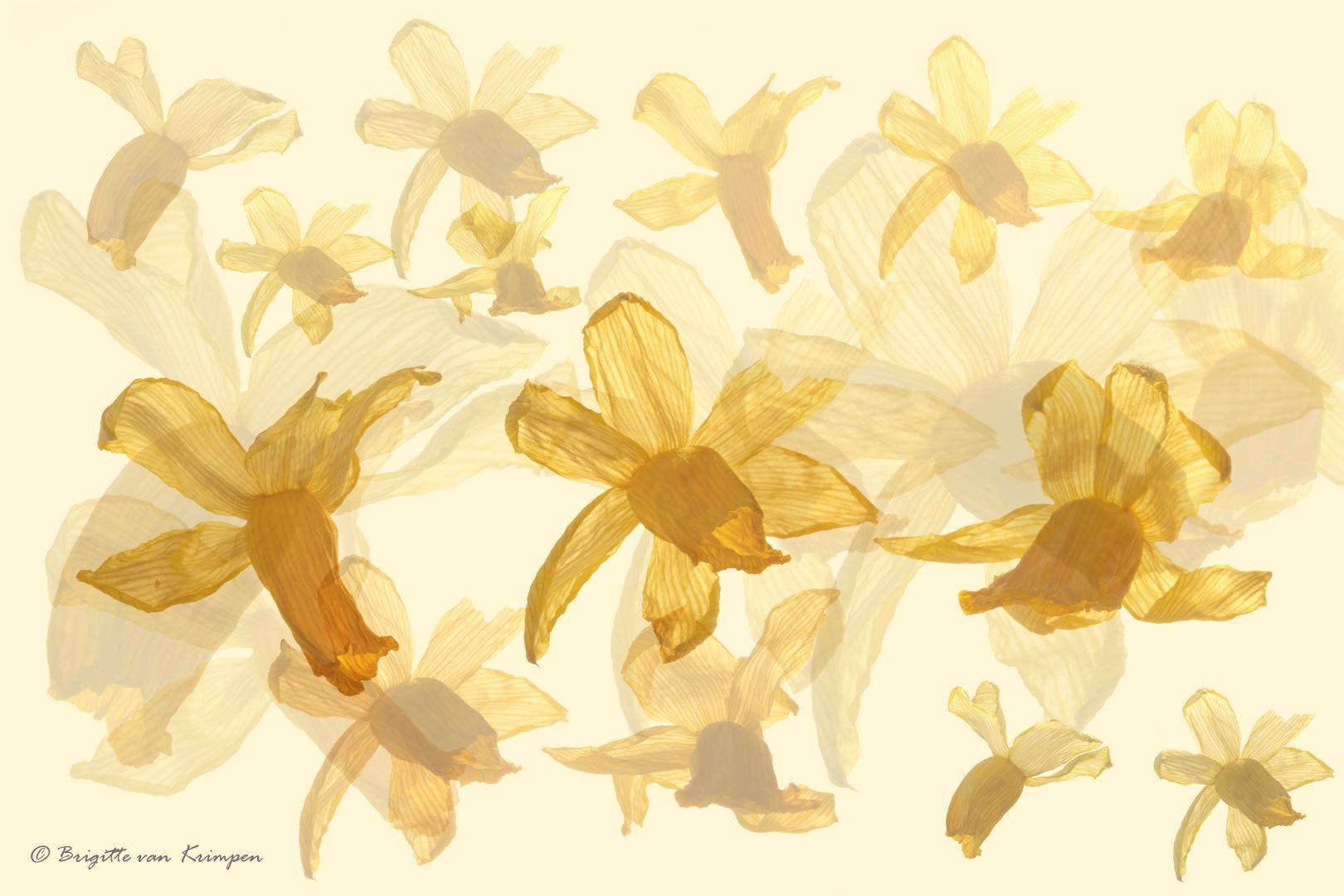Narcis 4 DDN