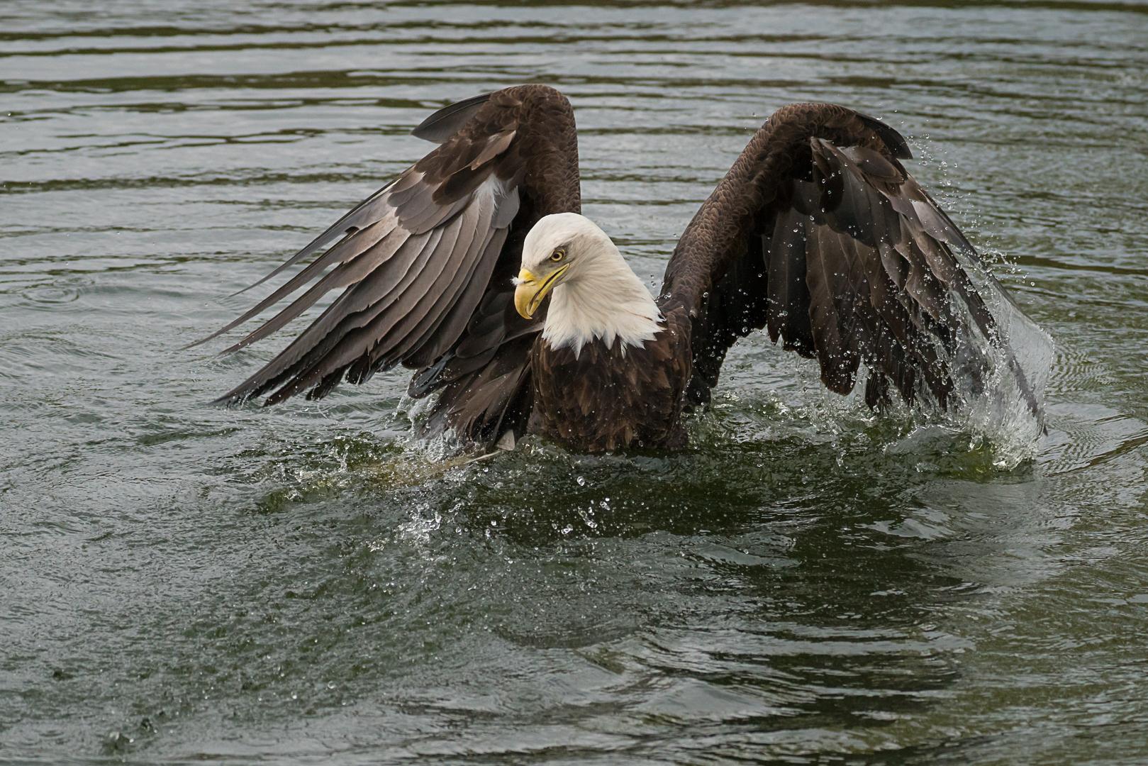 Machtige vleugels