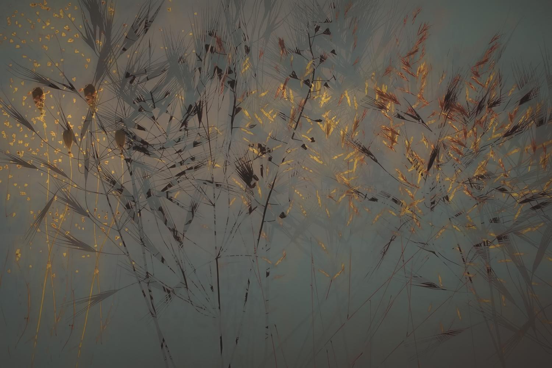 Grassen
