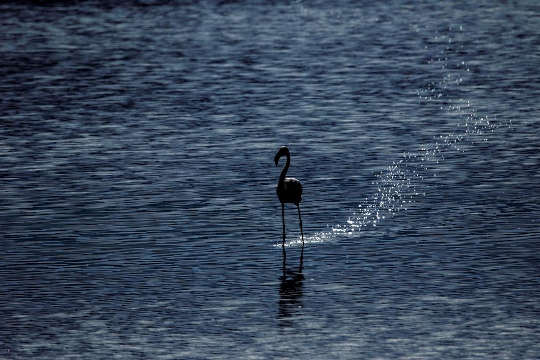 Flamingo laat een spoor na......