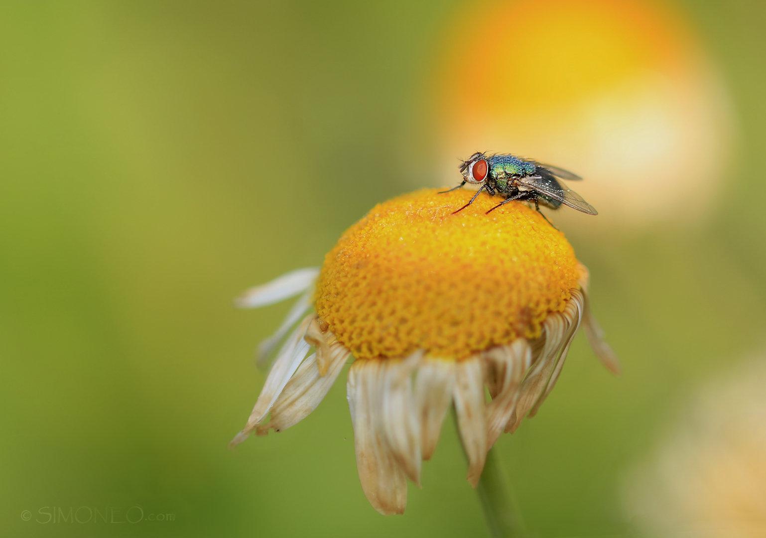 vlieg op geel DDN