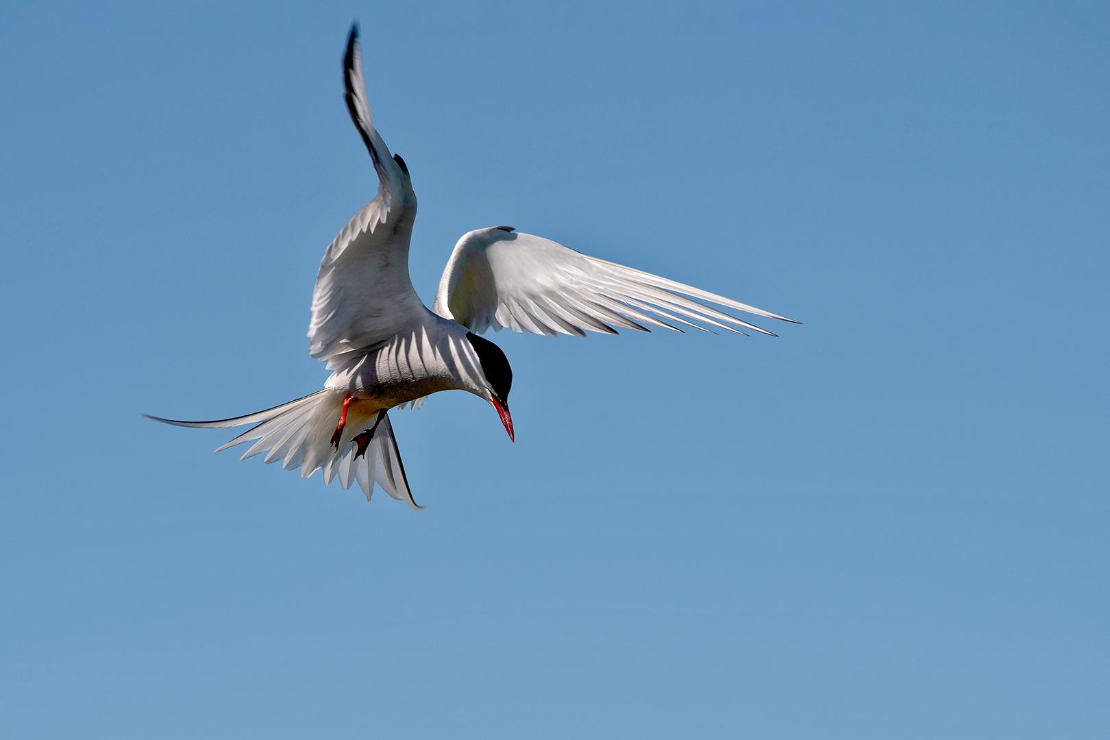 Vleugelschaduw