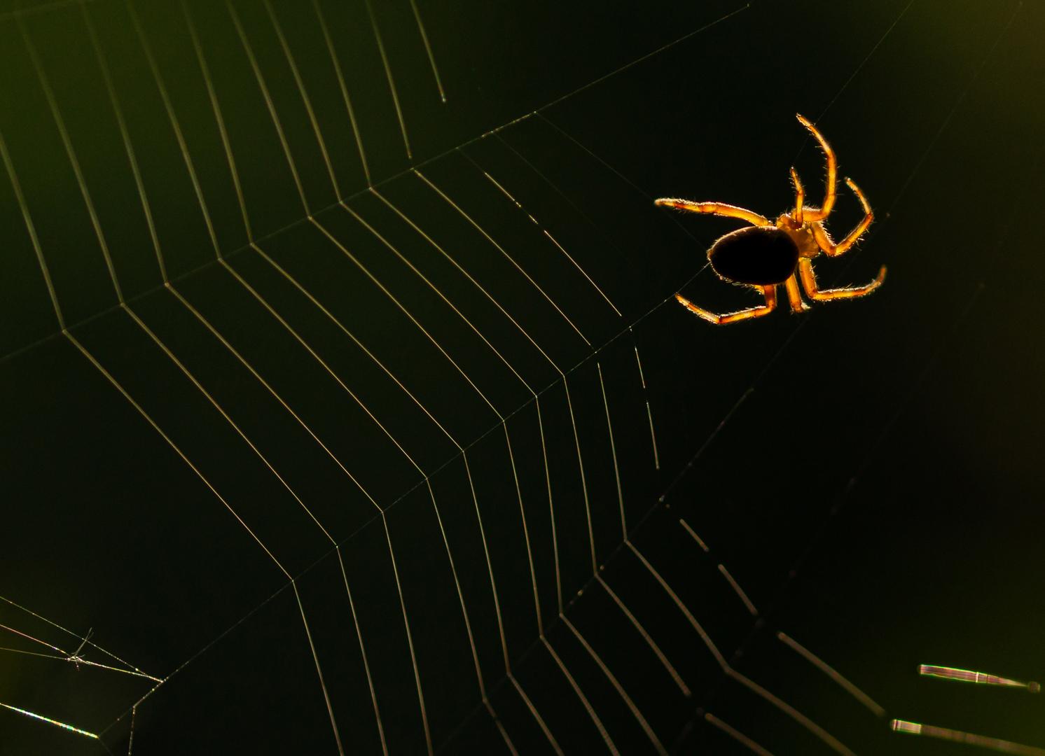 2019-07-29 spinnenweb