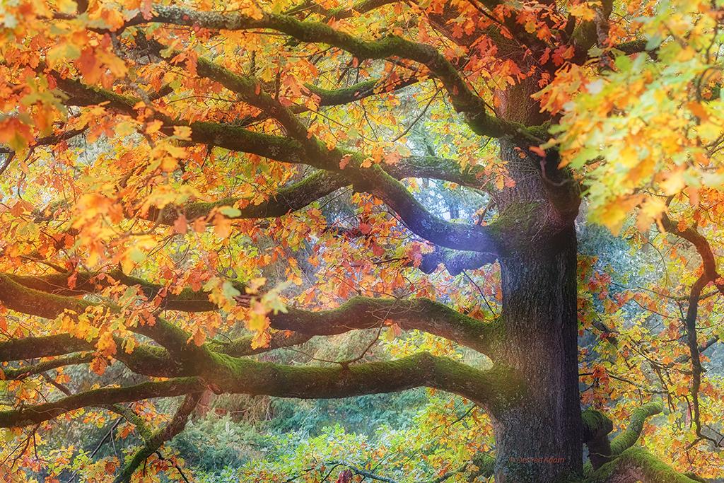 Kleurrijke boom 8354