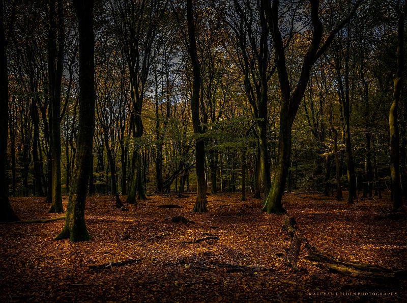 Golden Forest...