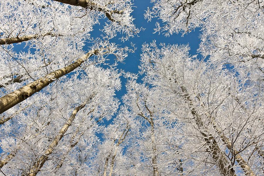 1202_Winter_0870