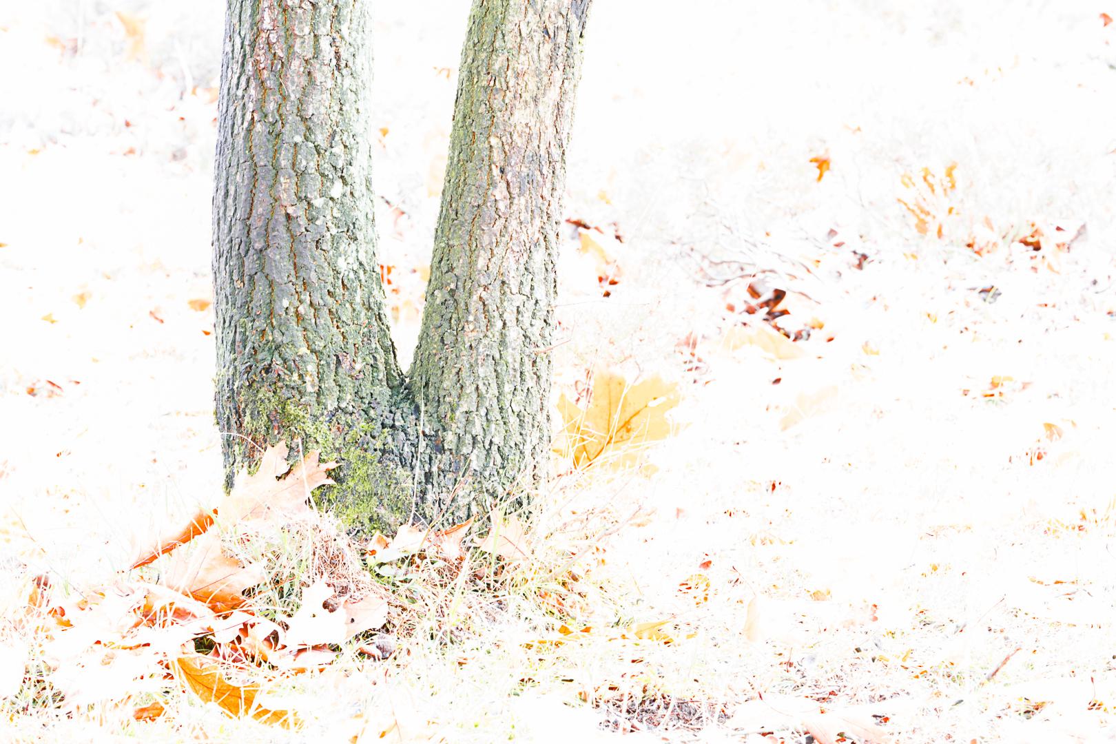 Witte herfst