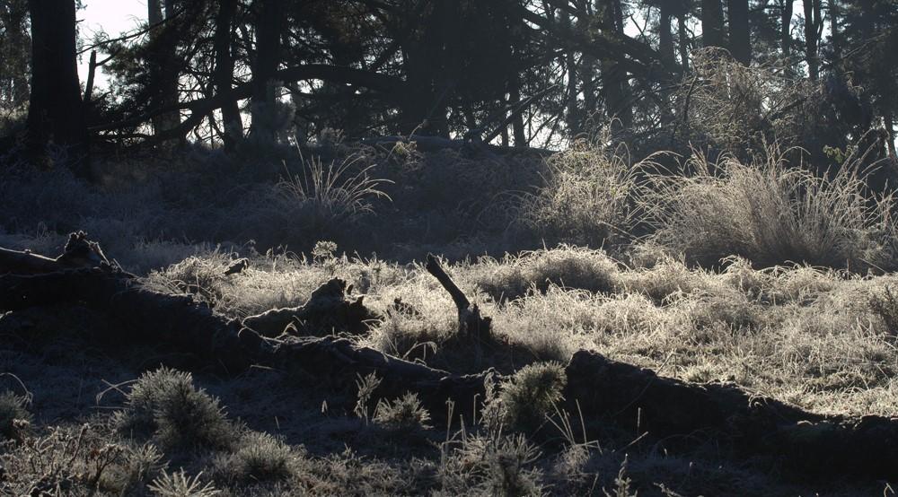 winter-uittenbogaard