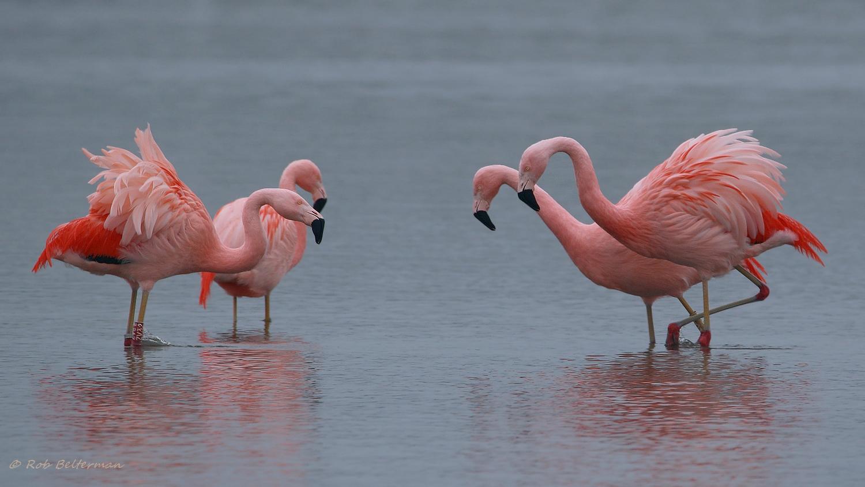 Flamingo-010545