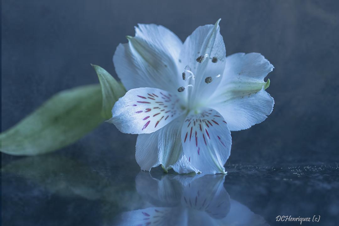Gestackte bloem