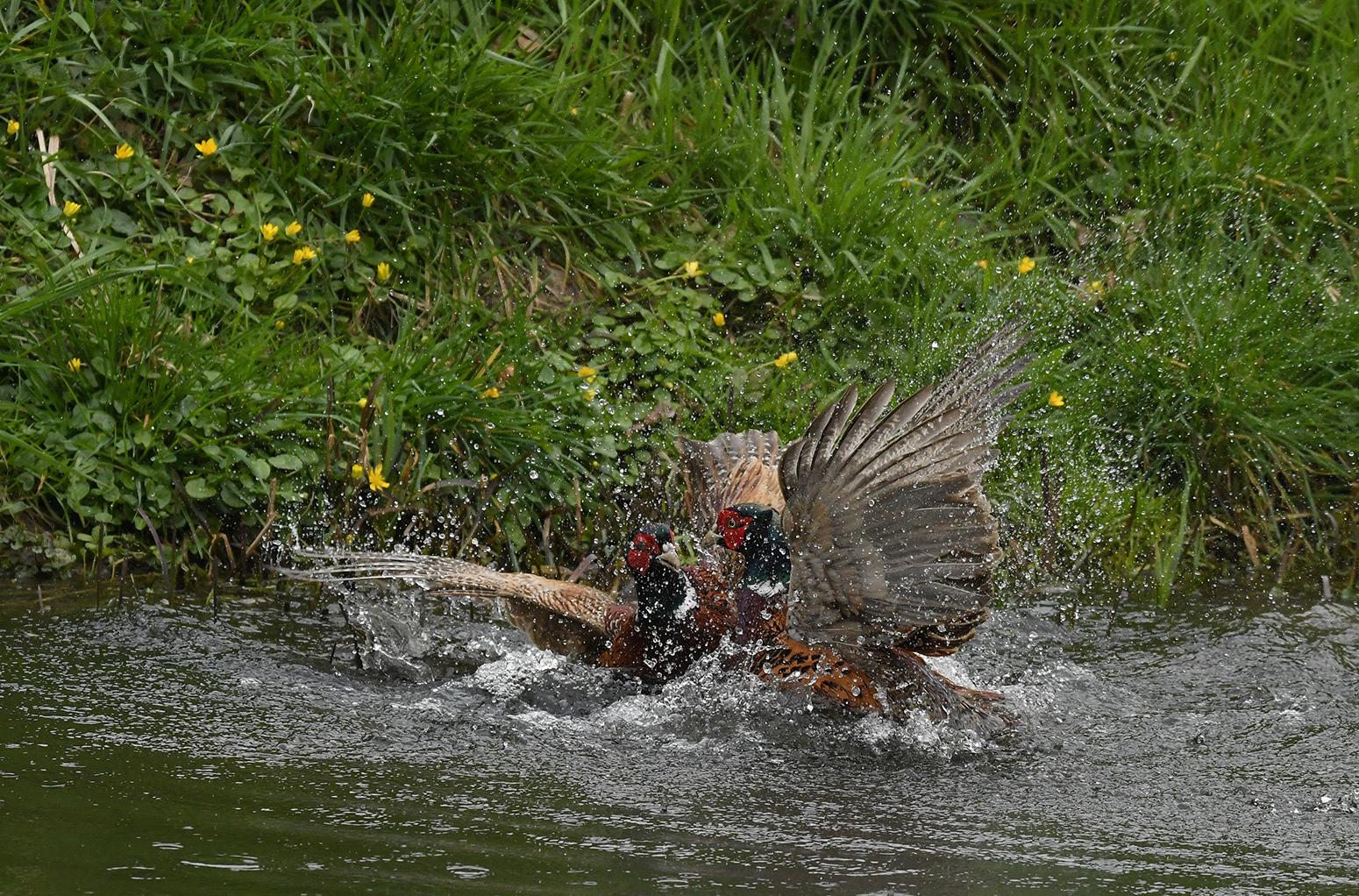 niet zwemvogels in het water 2