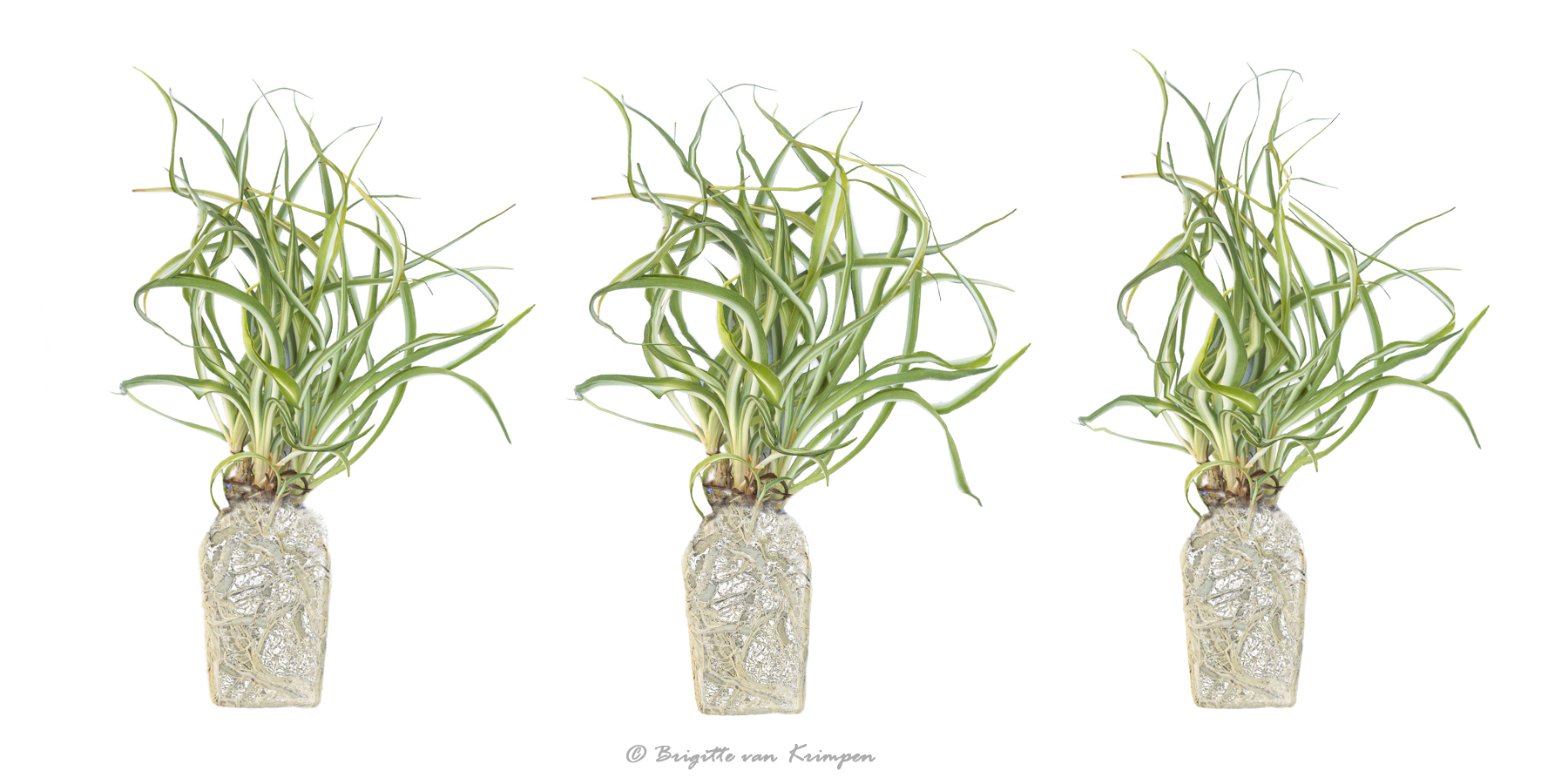 Plant Art DDN