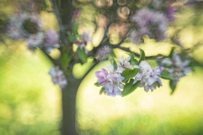 Happy Helios Treetest13klaar