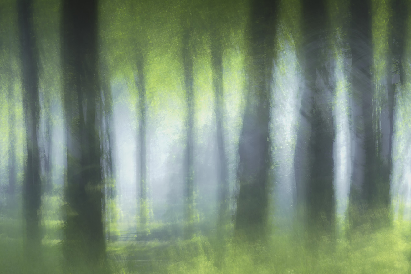 The forest light