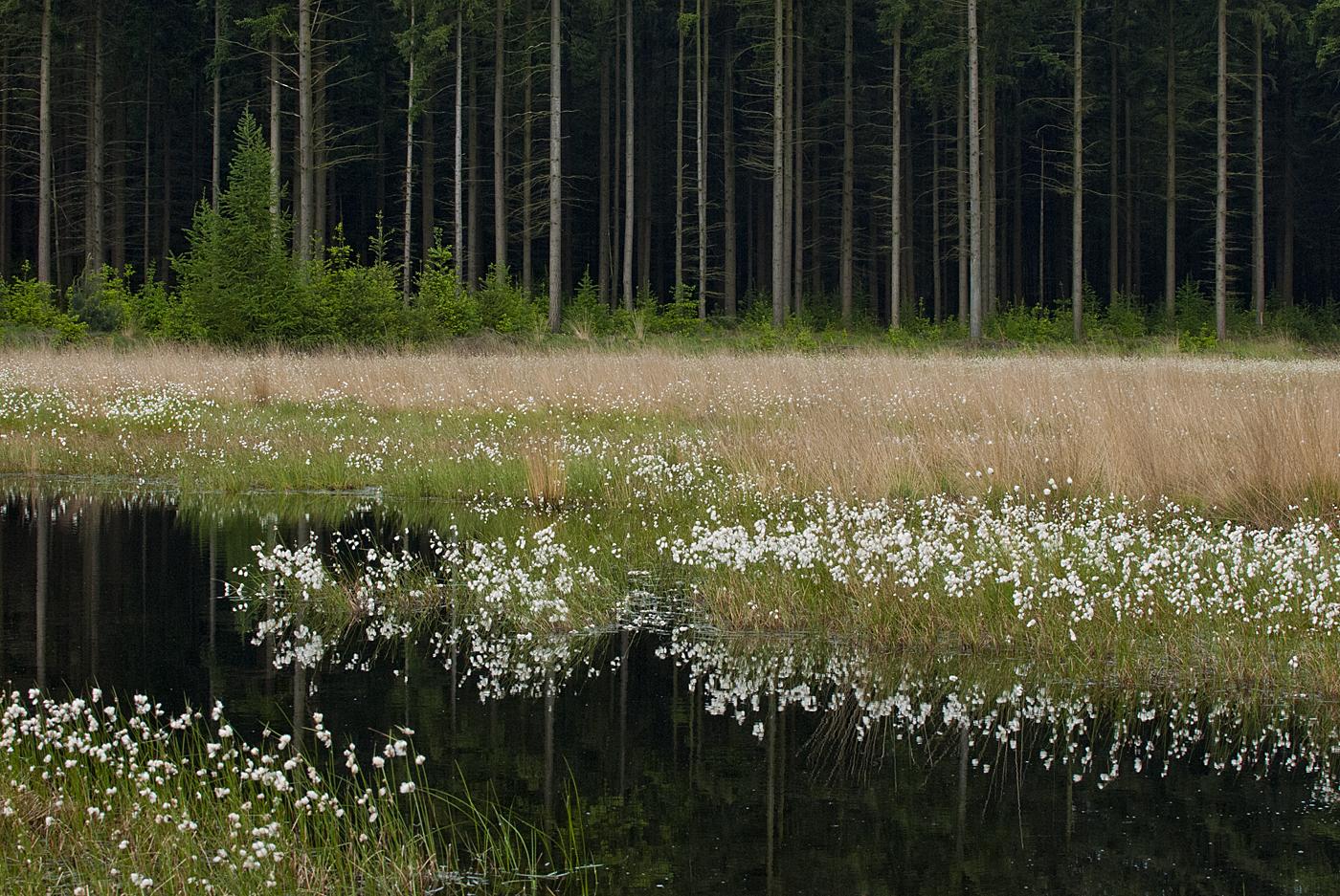 blanke veen 1400 bomen
