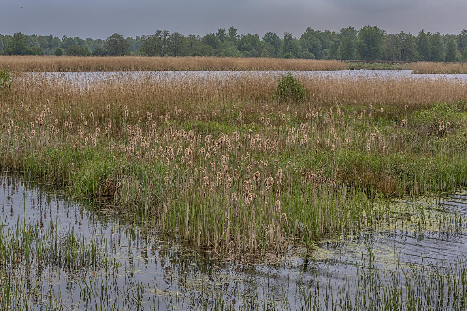 1658 Wetering 29-04-2020 B_nv_NIK_1620