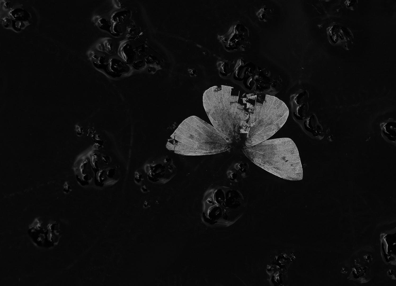 Verdronken Vlinder-Belfeld-bw-ddn